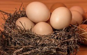 Lidl propose un cuiseur à œufs exclusif, profitez-en avant qu'il ne soit trop tard !