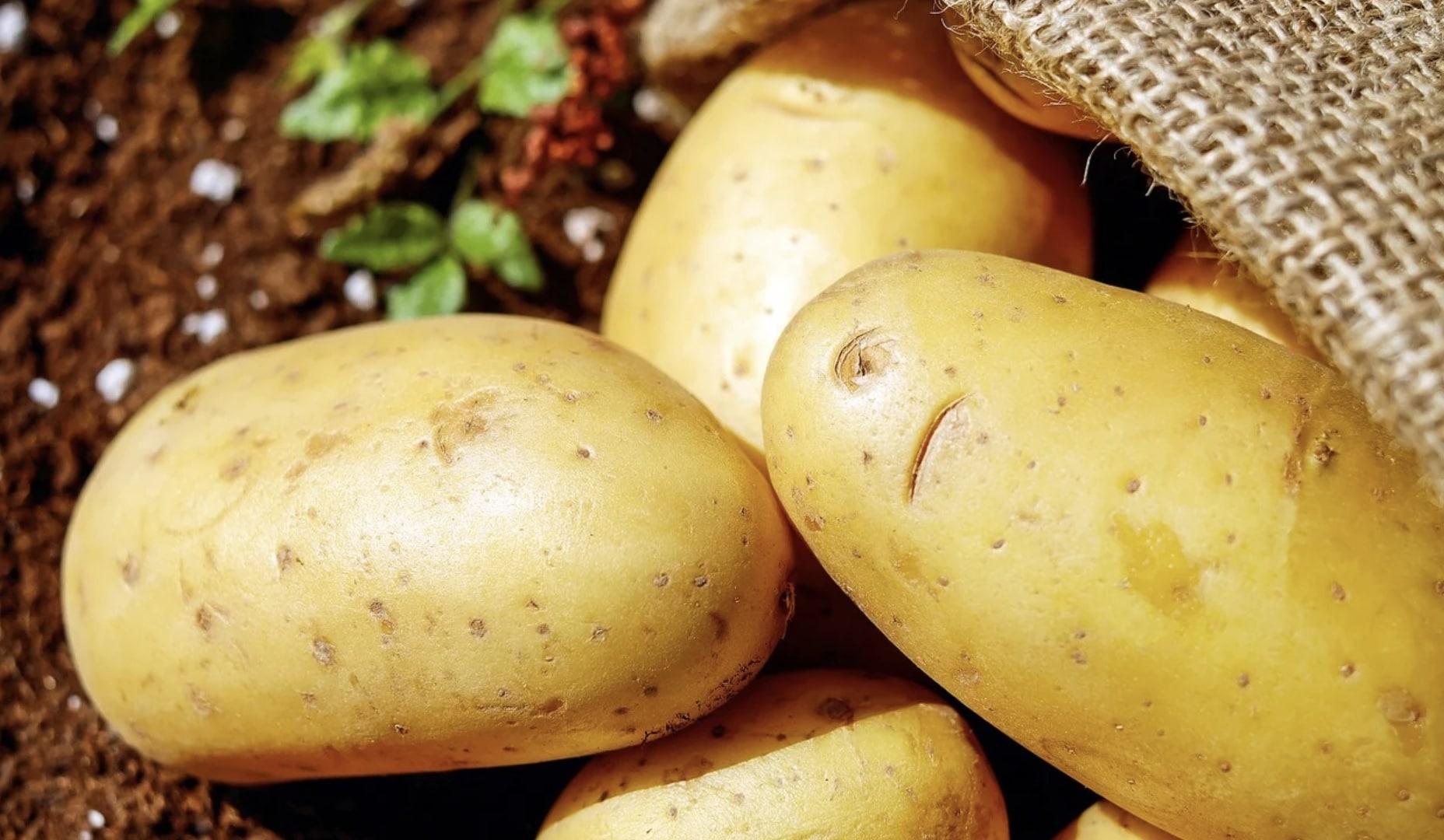 Cuire des pommes de terre : vous commettez tous la même erreur, suivez nos conseils pour l'éviter ! - Breakingnews.fr