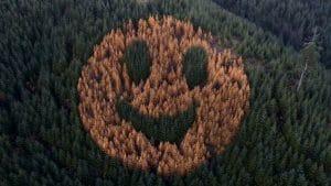 Photo incroyable : découvrez l'histoire émouvante derrière ce smiley géant apparu dans une forêt aux Etats-Unis