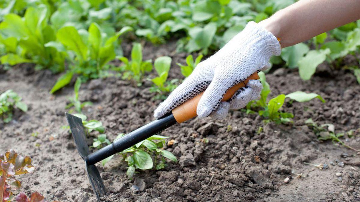 Jardinage : voici ces astuces écologiques pour éviter de gaspiller lors de l'entretien de votre jardin!