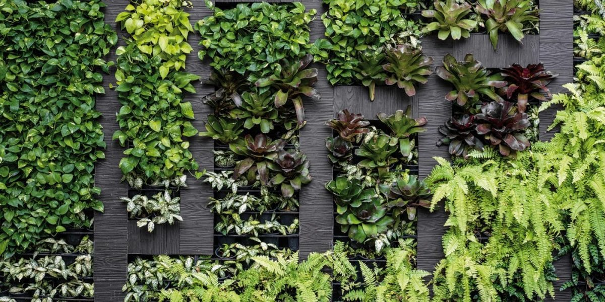 décoration-astuce-mur-végétal