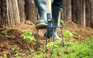 Jardin: découvrez les vertus incroyables du poivre pour lutter contre les nuisibles de votre jardin!