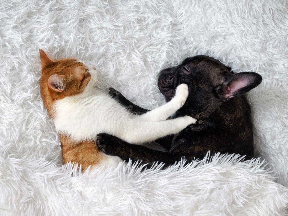 Animaux de compagnie : découvrez les astuces efficaces pour enlever les poils de chats de vos tissus !