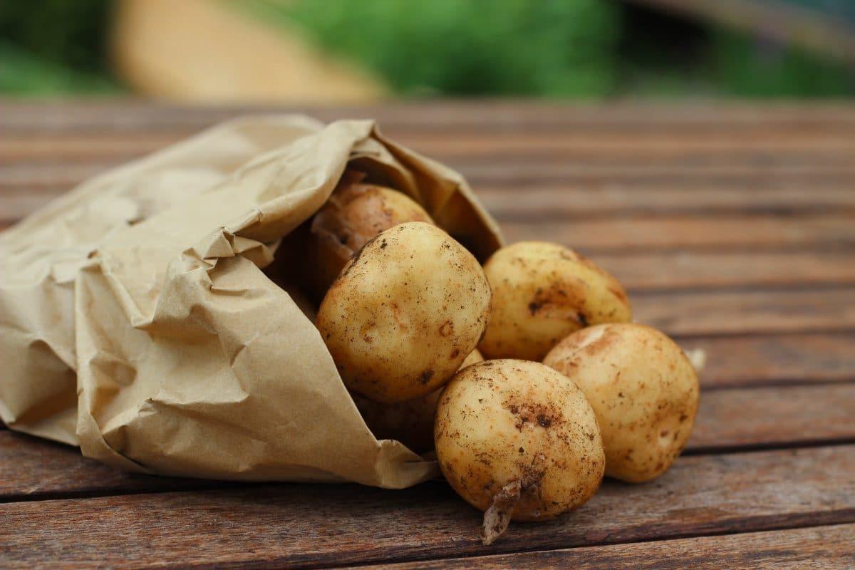 pomme-de-terre-germée