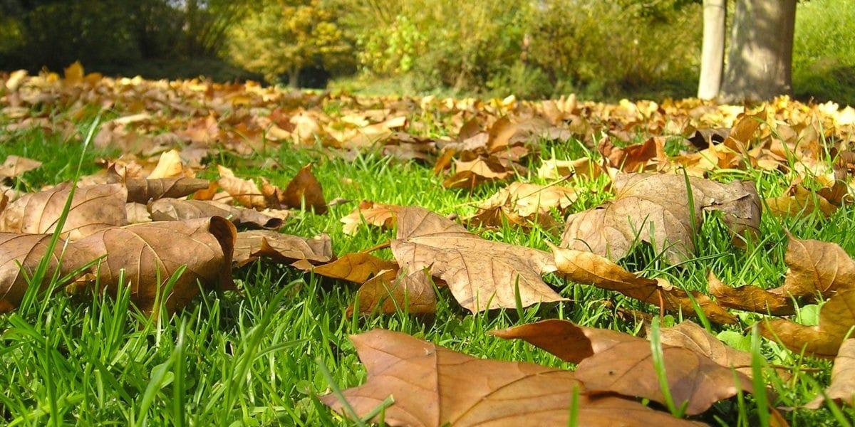 En automne, voici comment réutiliser les feuilles mortes qui tombent des arbres!