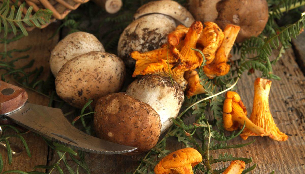 Astuce consommation : voici quelques astuces pour identifier les champignons comestibles !