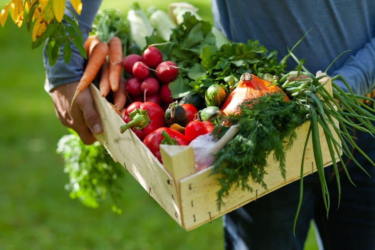 Cest-niveau-quintervient-nutriecologie-invitant-consommer-alimentation-variee-produits-vegetaux-0