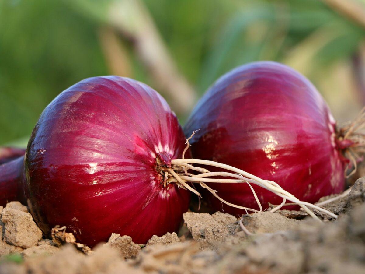Astuces santé : pourquoi devez-vous souvent manger des oignons rouges !