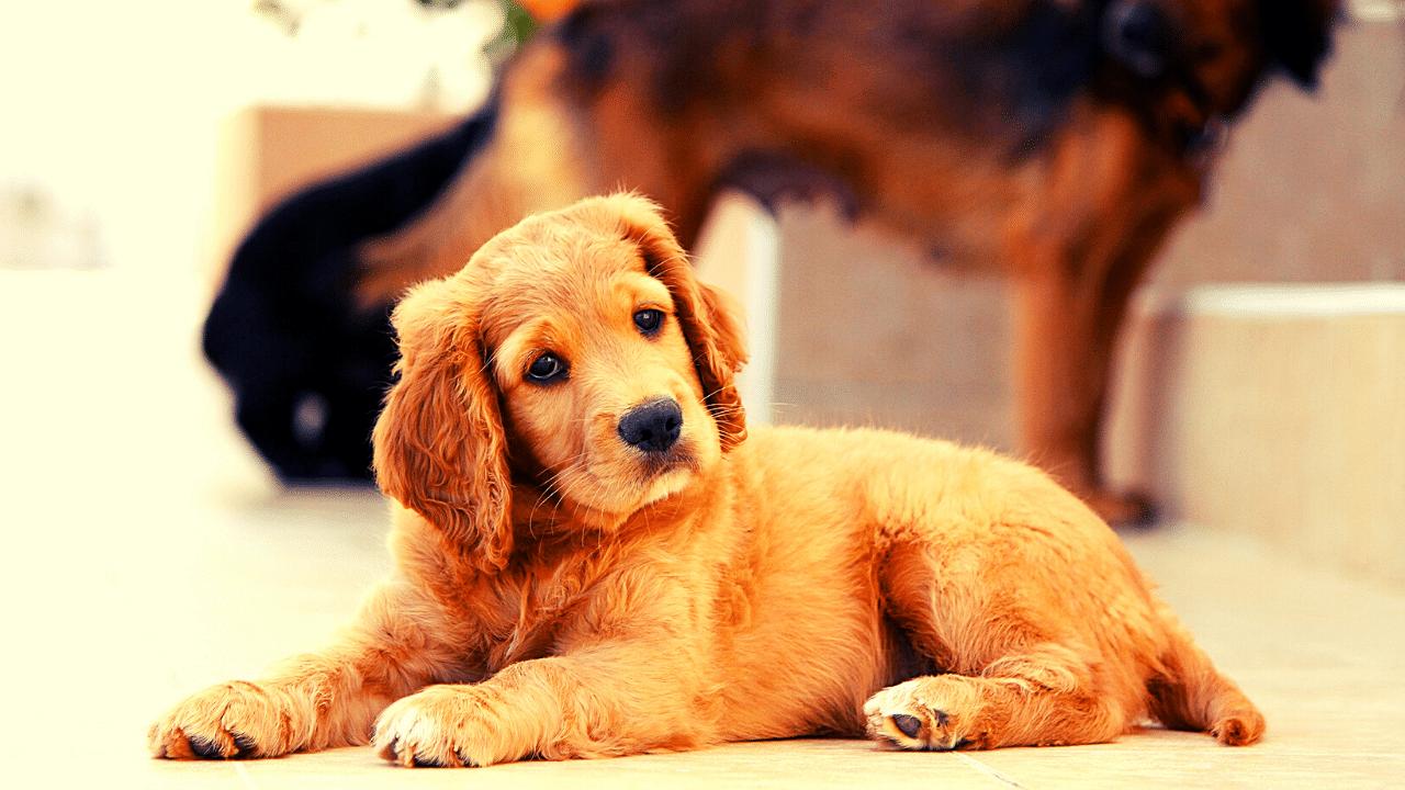 Comment développer l'intelligence de votre chien en le distrayant?
